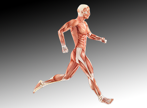 image: body muscles